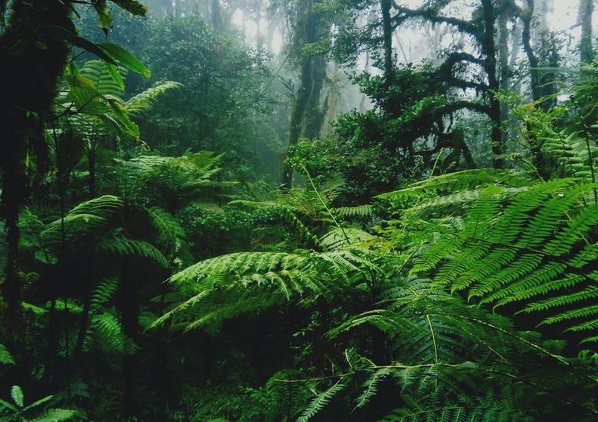 Forêt d'EBO, Quid des hommes du bois ou des Gorilles ?